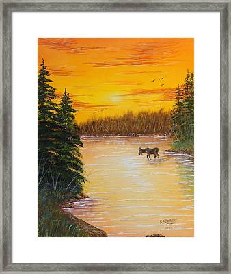 Immersed Framed Print by David Bentley