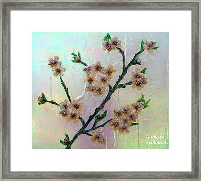 Immortal Almond  Framed Print by Augusta Stylianou