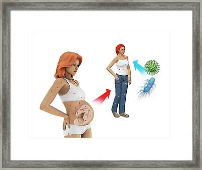 Immunity Being Passed To Baby Framed Print by Mikkel Juul Jensen