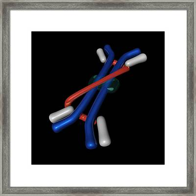 Immunoglobulin A, Molecular Model Framed Print by Science Photo Library