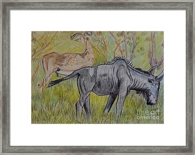 Impala And Wildebeest Framed Print by Caroline Street