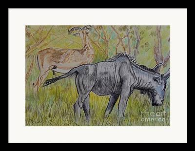 Carolinestreetart Drawings Framed Prints