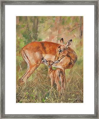 Impala Antelop Framed Print by David Stribbling