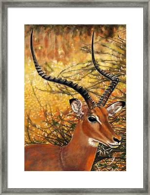 Impala At Sunset Framed Print