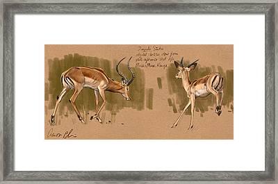 Framed Print featuring the digital art Impala Studdies by Aaron Blaise