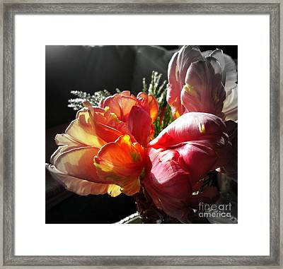 Impassioned Framed Print by Sian Lindemann