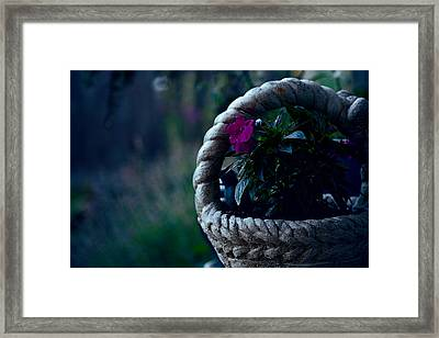 Impatiens Framed Print by Bonnie Bruno