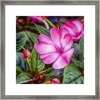 Impatiens Pink Framed Print