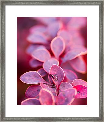 Framed Print featuring the photograph Imperfect by Erin Kohlenberg