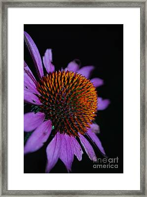 Imperfect Glory Framed Print