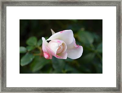 Imperfect Perfection Framed Print