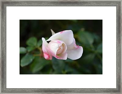 Imperfect Perfection Framed Print by Regina Avila
