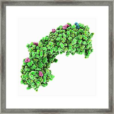 Importin Alpha 1 Protein Framed Print by Laguna Design