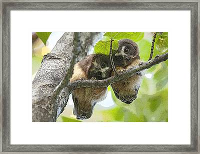 Impossibly Cute Owl Fledglings- Abstract Framed Print by Tim Grams