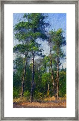 Impression Trees Framed Print
