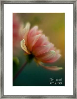 Impressionist Dahlia Framed Print by Mike Reid