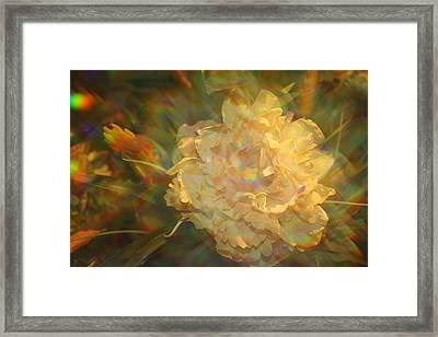 Framed Print featuring the photograph Impressionistic Rose by Dora Sofia Caputo Photographic Art and Design