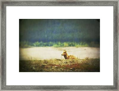 Impressionistic Style Of A Bighorn Framed Print by Roberta Murray