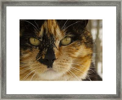 Calico Framed Print by Julie Smith