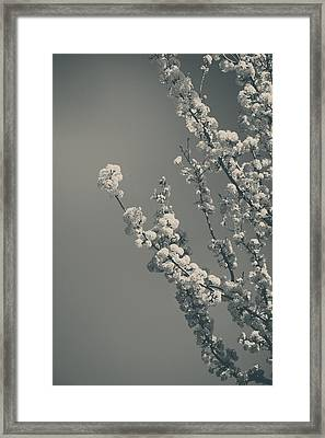 In A Beautiful World Framed Print
