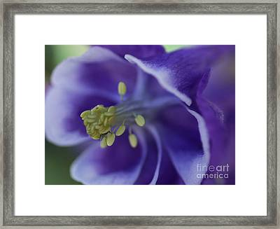 In A Bugs World Framed Print