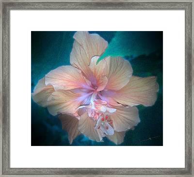 In A Butterfly Garden Framed Print