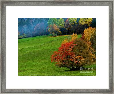 In A Field Of Green Framed Print