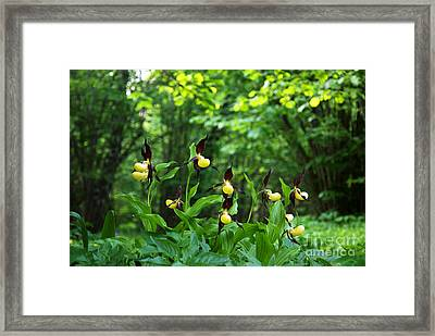 Framed Print featuring the photograph In A Forest Glade by Kennerth and Birgitta Kullman