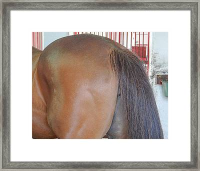 In A Horses A#@ Framed Print