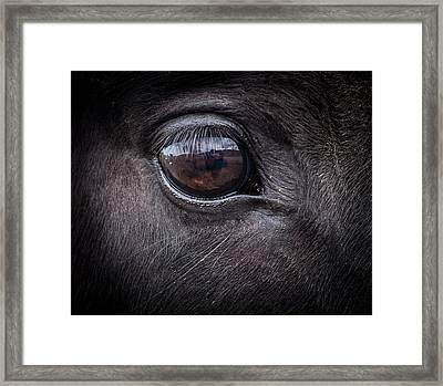 In A Horse's Eye Framed Print