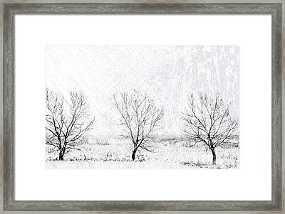 In A Line. Winter Trees Framed Print by Jenny Rainbow