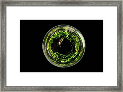 In A Long Exposure, Bioluminescence Framed Print by David Liittschwager