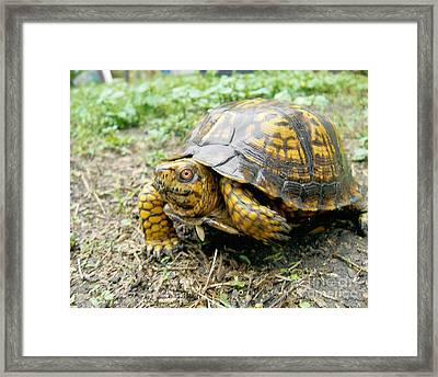 In A Minute Framed Print by Richard Brooks