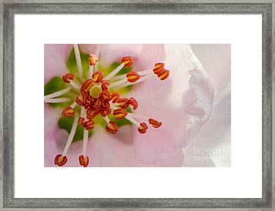 In A Pink Cloud Framed Print