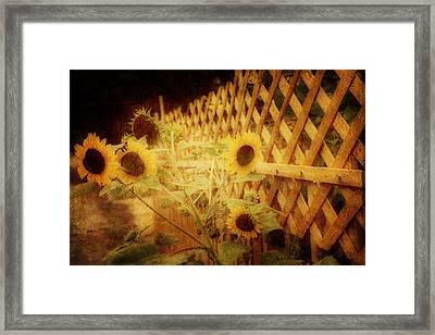 Sunflowers And Lattice Framed Print by Toni Hopper
