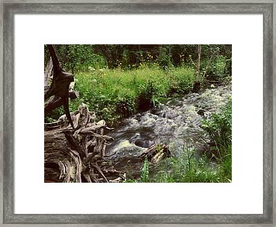 In A Rush Framed Print