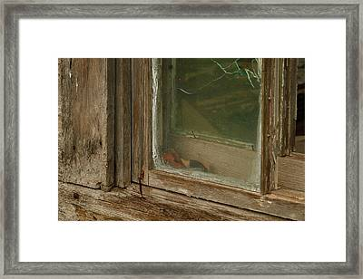 In A Window Pane Framed Print