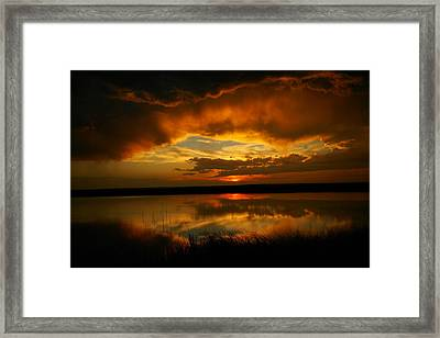 In All His Glory Framed Print by Jeff Swan
