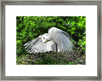 In All His Glory Framed Print