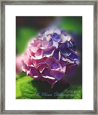 In All Their Glory Framed Print
