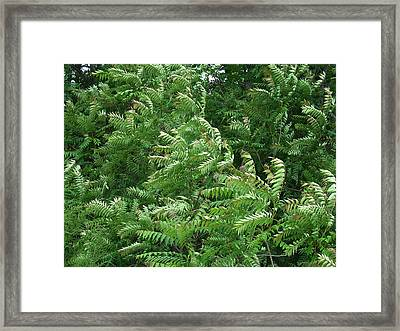 In An Instant Of A Summer's Breeze The Forest Dances And Sways Framed Print by Terrance DePietro