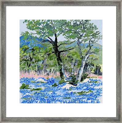 In April-texas Bluebonnets Framed Print