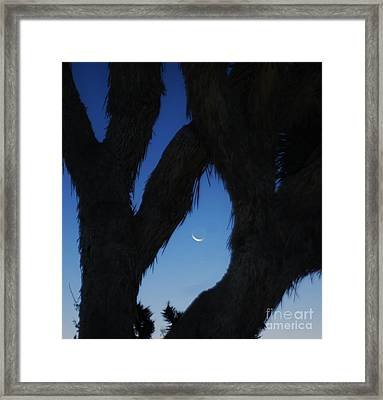 In-between Framed Print by Angela J Wright