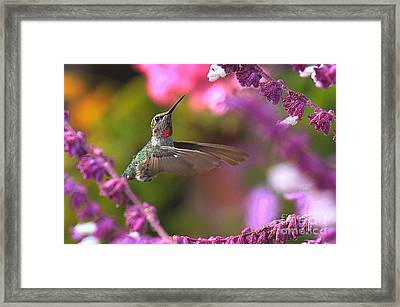 In Between Meals Framed Print
