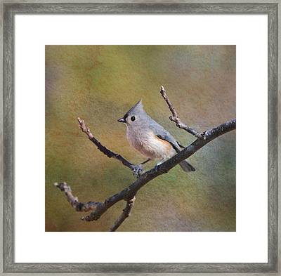 In Betwigst Framed Print