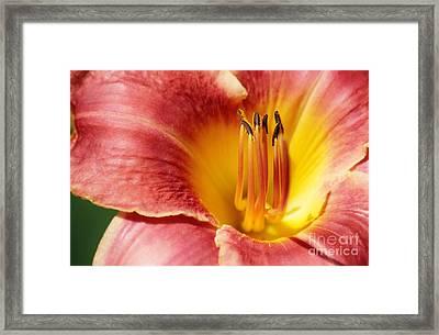 In Bloom Framed Print by Barbara Bardzik