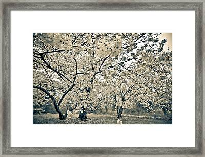 In Bloom Framed Print by Kristopher Schoenleber