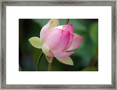 In Bloom Framed Print