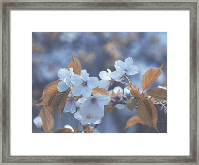 Framed Print featuring the photograph In Blue by Rachel Mirror