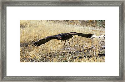 In Coming Framed Print by Randall Ingalls